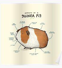 Anatomie eines Meerschweinchens Poster