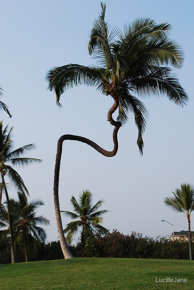 "Hawaii Slanted House Design: ""hawaiian Crooked Palm Tree"" By LucilleJane"