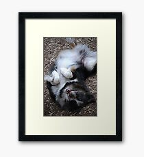 dirty dog bath Framed Print