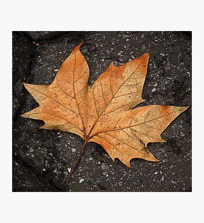 leaf study Photographic Print
