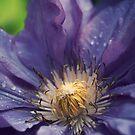 wayside flower by sabrina card