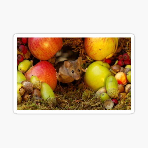 George the mouse in a log pile house - stand back apples super mouse coming through Sticker