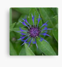 Thin blue flames in a sea of green Canvas Print