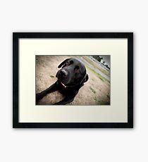 Trigger dog Framed Print