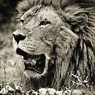 LION by rsofyan