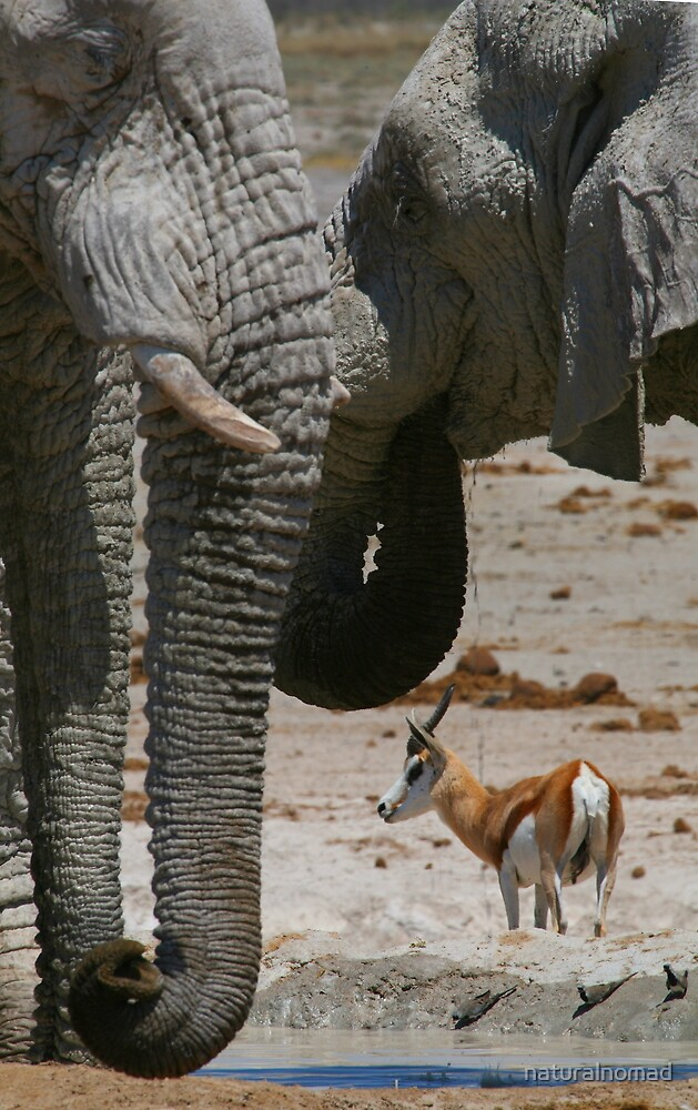 African Waterhole by naturalnomad