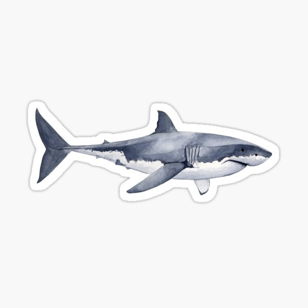 GREAT WHITE SHARK Pegatina