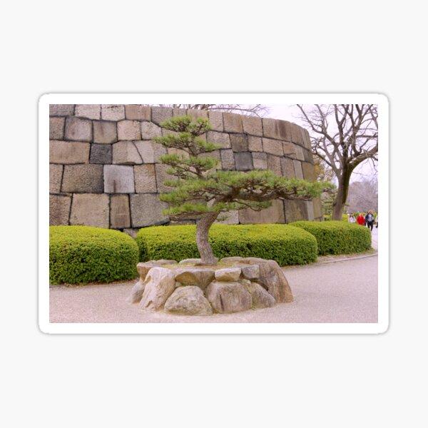 Japanese Pine Sticker
