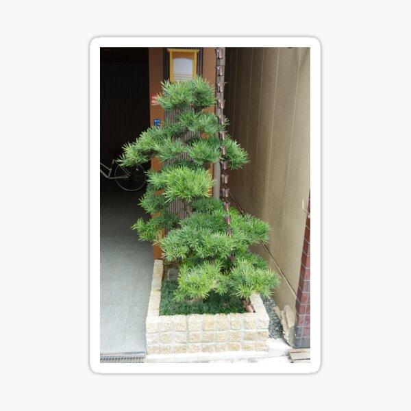 Podocarpus Sticker