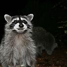 Smiling Raccoon by blew12bandit
