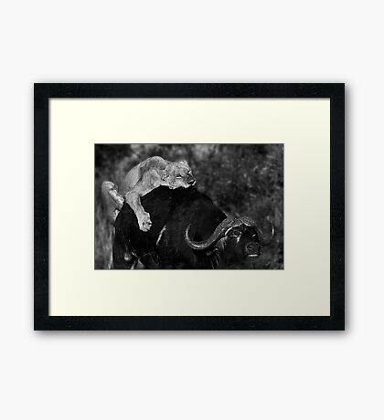 Survival of the Fittest II Framed Print