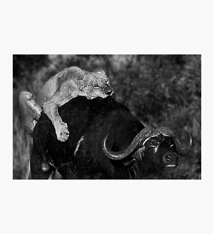 Survival of the Fittest II Photographic Print