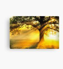 Tree basking in sunshine  Canvas Print