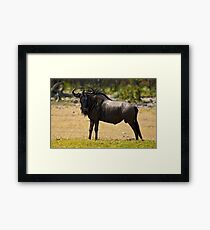 Heavy weight champion! Framed Print