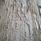 Cracked Paint on old wooden door by Chanzz