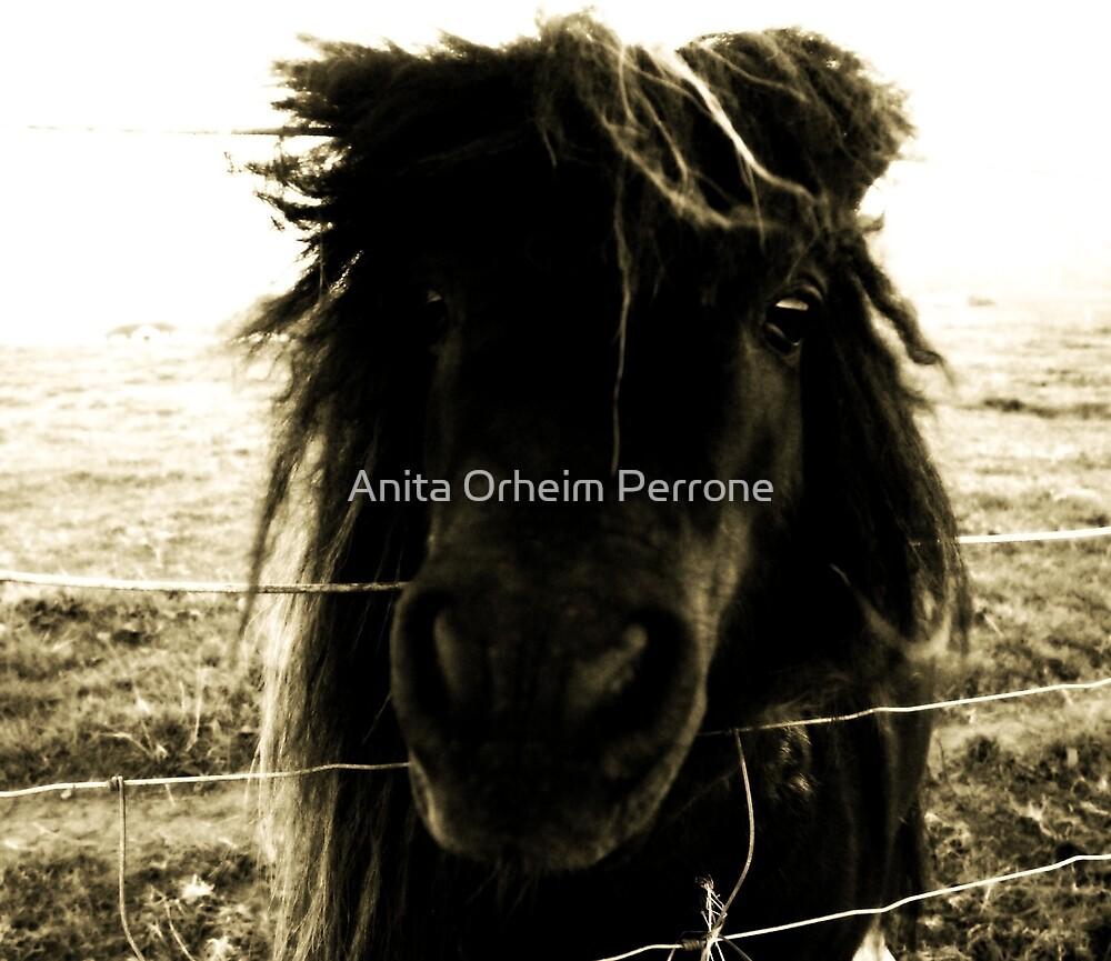 Bad Hair Day by Anita Orheim