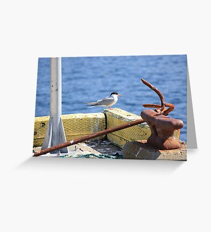 Sitting On The Dock Of The Bay - Arctic Tern Greeting Card