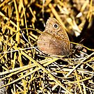 Common Wood Nymph in chamouflage by amontanaview