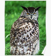 Eagle Owl 2 Poster