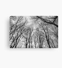 Branching Canvas Print