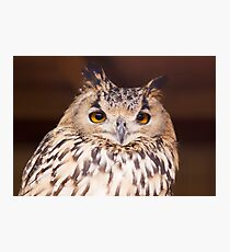 Bit Of A Hoot Photographic Print