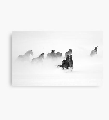 After the Blizzard B&W Metal Print