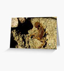 Stripe-tailed Scorpion Greeting Card