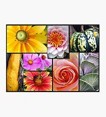 Gardener's Delight Photographic Print