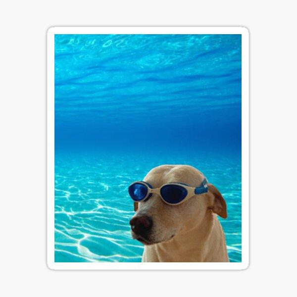 Underwater Dog Sticker