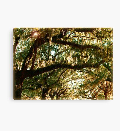 Branches - Leaves - Moss & Sky Canvas Print