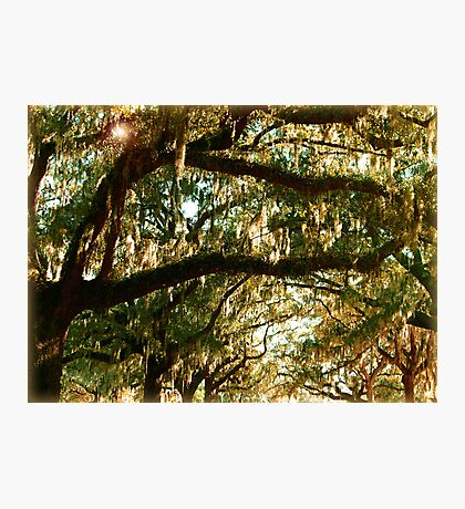 Branches - Leaves - Moss & Sky Photographic Print
