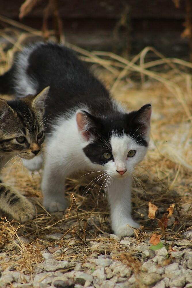 Two Kittens by rhamm