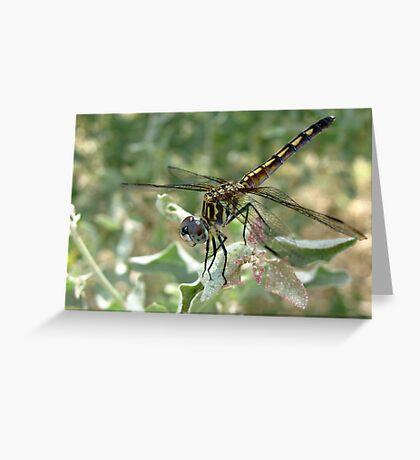 Dragonfly ~ Blue Dasher (Female) Greeting Card