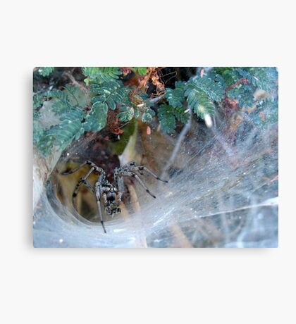 Funnel Web Spider Canvas Print