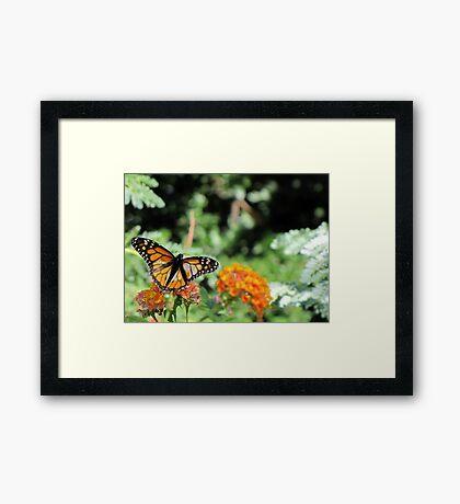 Butterfly ~ Monarch Butterfly Framed Print