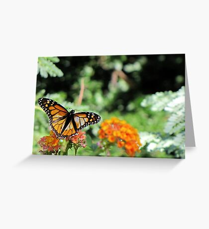Butterfly ~ Monarch Butterfly Greeting Card