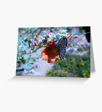 Butterfly ~ Marine Blue Greeting Card
