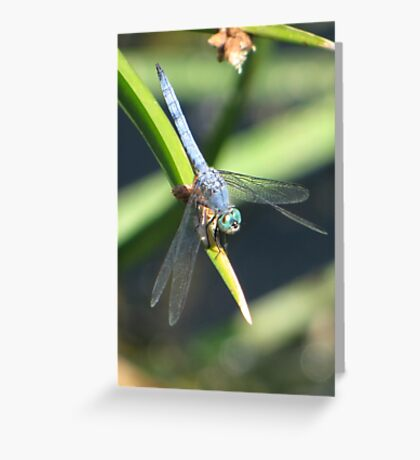 Dragonfly ~ Blue Dasher (Male) Greeting Card