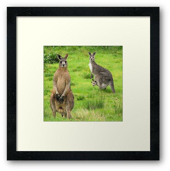soggy kangaroos by Peta Hurley-Hill