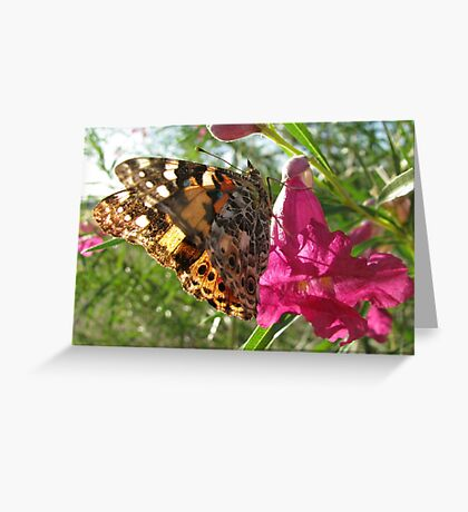 Butterfly ~ Painted Lady Greeting Card