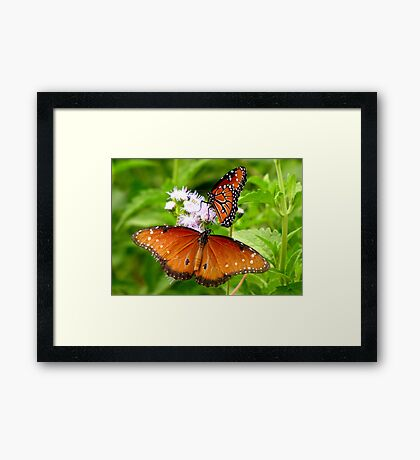 Pollination Series ~ 5 Framed Print
