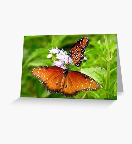 Pollination Series ~ 5 Greeting Card