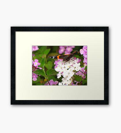 Pollination Series ~ 4 Framed Print