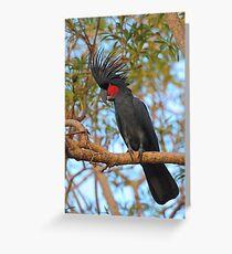Palm Cockatoo Greeting Card