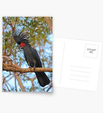 Palm Cockatoo Postcards