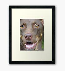 Shaggy.. Framed Print