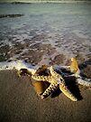 Starfish by Tam  Locke