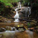 La La Falls Yarra Ranges. by Donovan Wilson