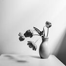 Wilting tulips by the window (black and white) by Natalie Board