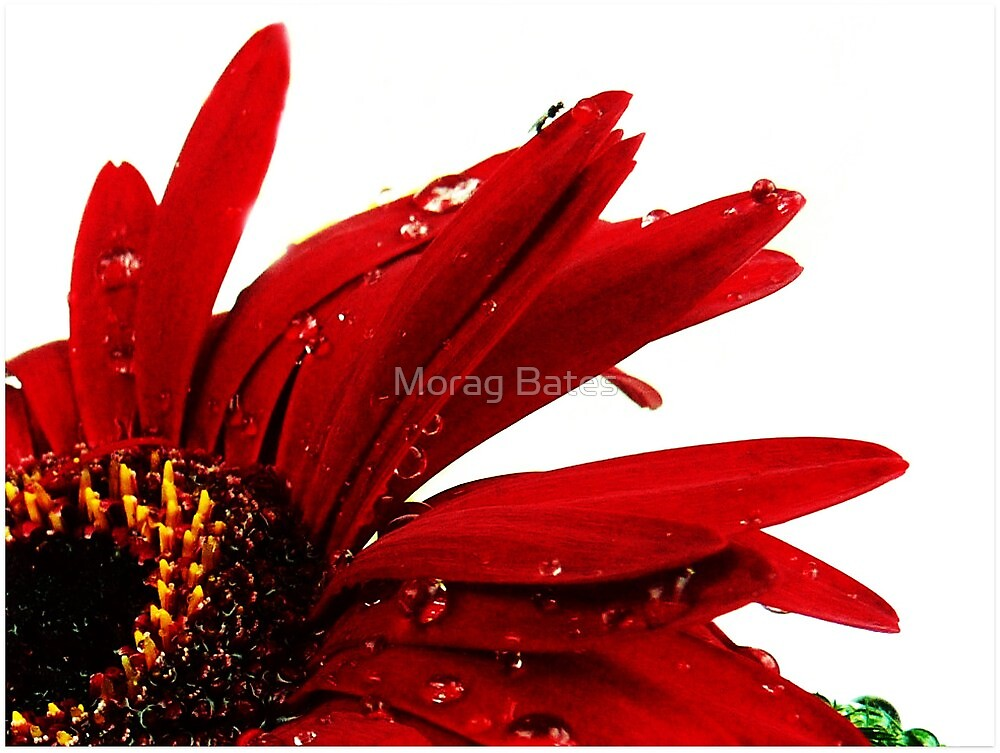 Red by Morag Bates